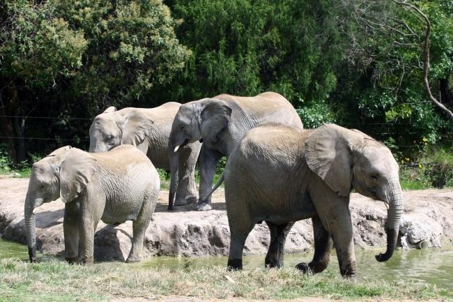 Hoy se conmemora el `Día Mundial de los animales`